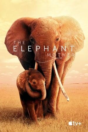 The Elephant Mother