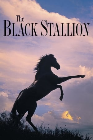 Poster The Black Stallion 1979