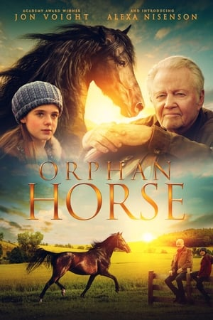 Image Orphan Horse