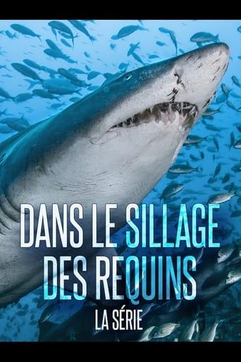 Dans Le Sillage Des Requins - Les prédateurs