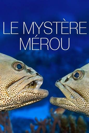 Le Mystère Mérou