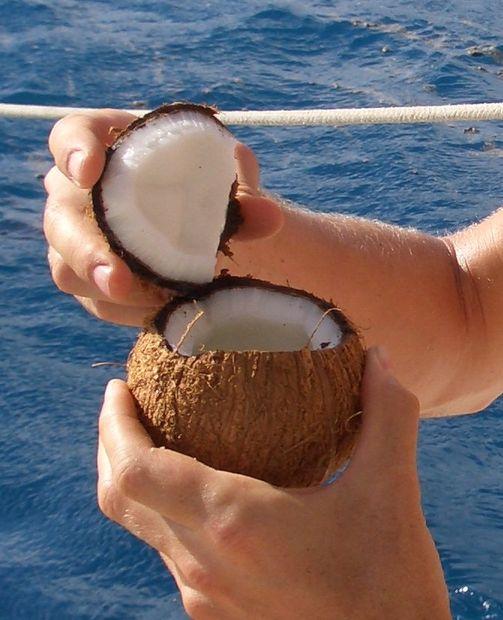 Comment Couper Une Noix De Coco : comment, couper, Comment, Ouvrir, Tubefr.com