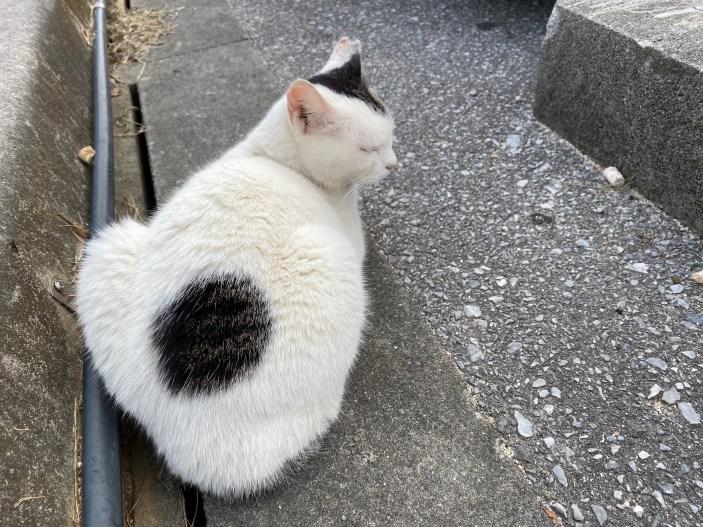 沖繩奧武島貓咪