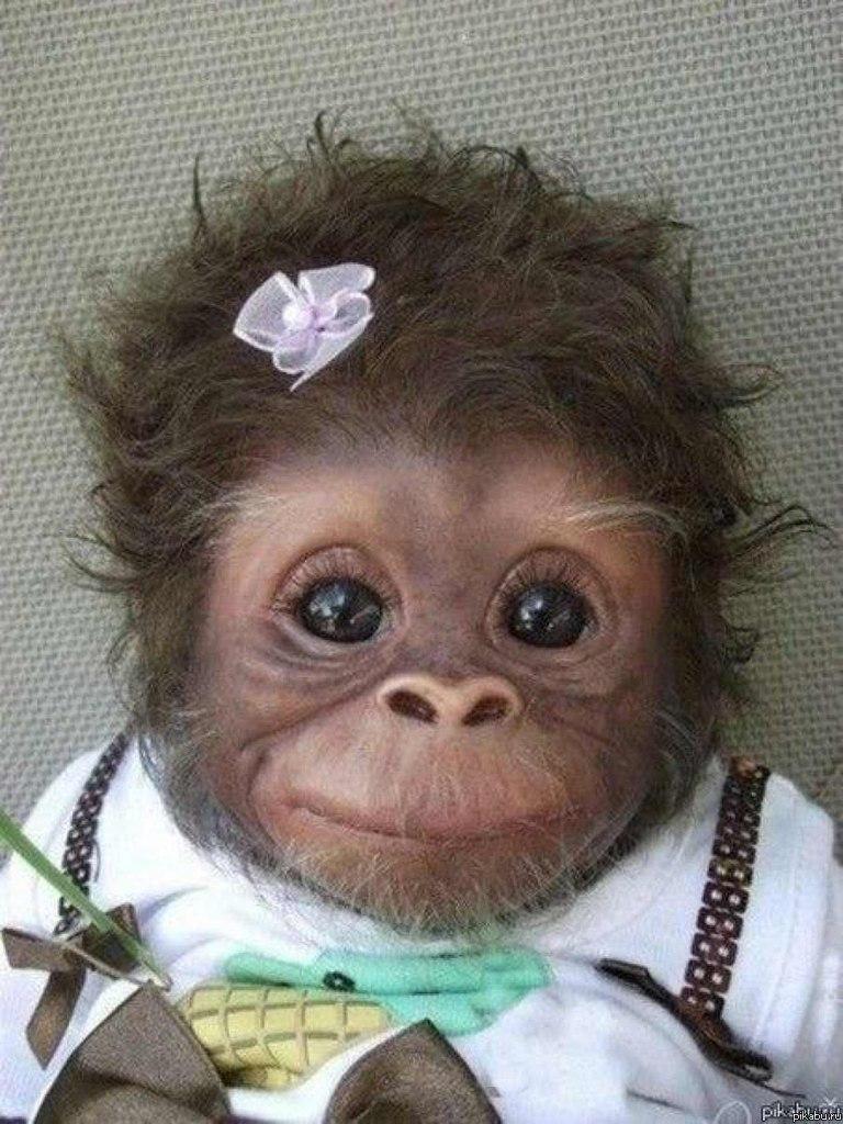 好萌的小猩猩