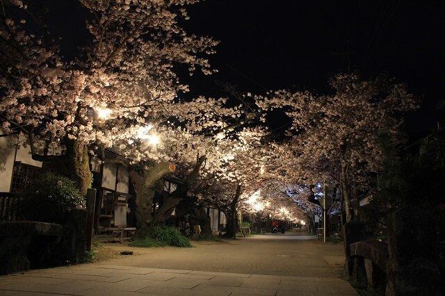 「秋月城 花見」の画像検索結果