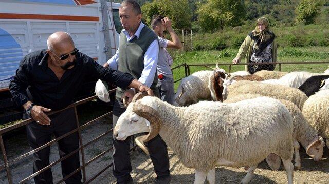 Köyüne geri dönen çiftçi ailelere verilecek 300 damızlık koyun heyecana yol açtı.