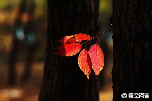 """""""生活不光是茍且眼前。還有詩和遠方""""。但是為什麼我只看到了眼前的茍且。看不到詩和遠方? - 資訊定製"""