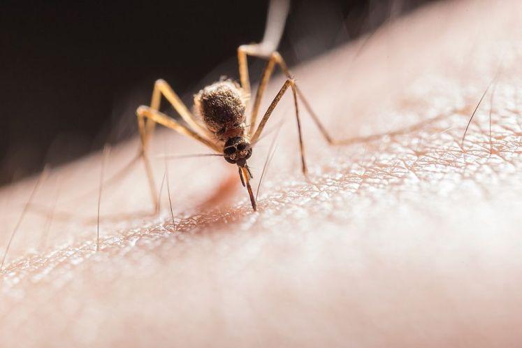 如何挑選好用的捕蚊拍?熱銷充電式捕蚊拍、電蚊拍推薦