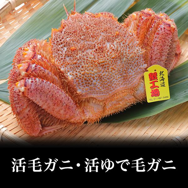 【北海道産】活毛ガニ・活ゆで毛ガニ約350g/1尾