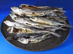 あご煮干し(平戸産) 1kg