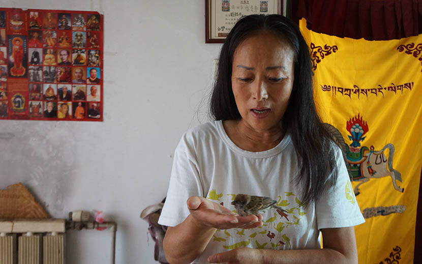 Liu Yidan holds a hatchling at her home in Tianjin, June 30, 2016. Fan Yiying/Sixth Tone