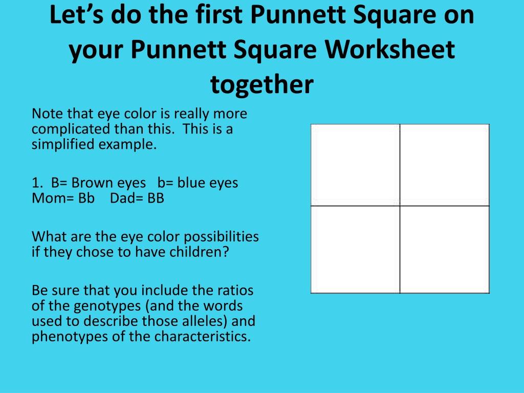 Eye Color Punnett Square Worksheet