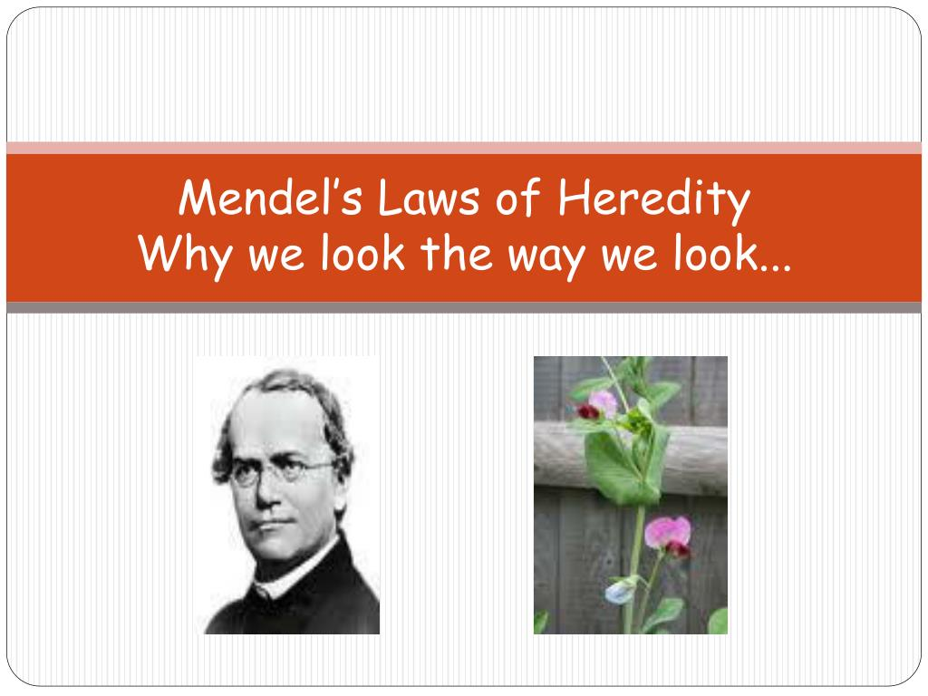 Laws Of Heredity Mendel S Law Of Segregation 01 17