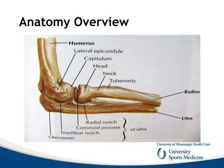PPT - Elbow Anatomy and Biomechanics PowerPoint ...