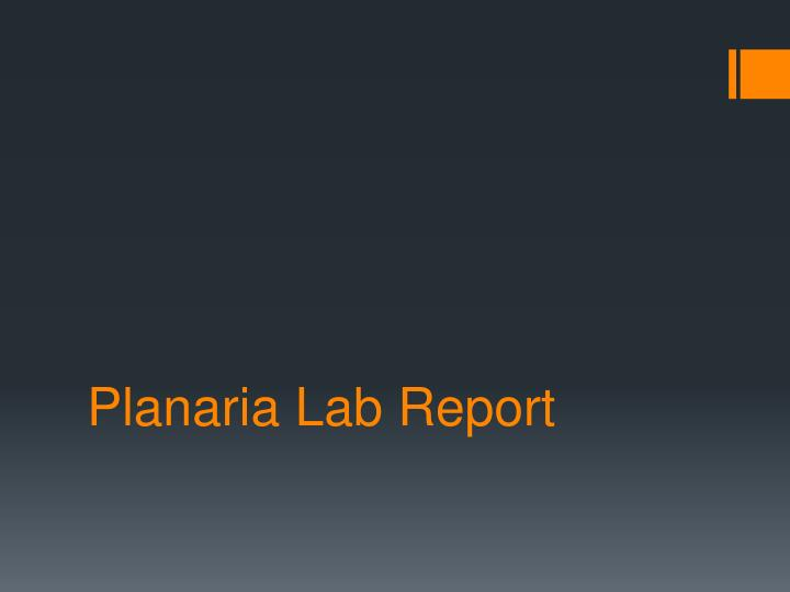 PPT  Planaria Lab Report PowerPoint Presentation  ID1923539