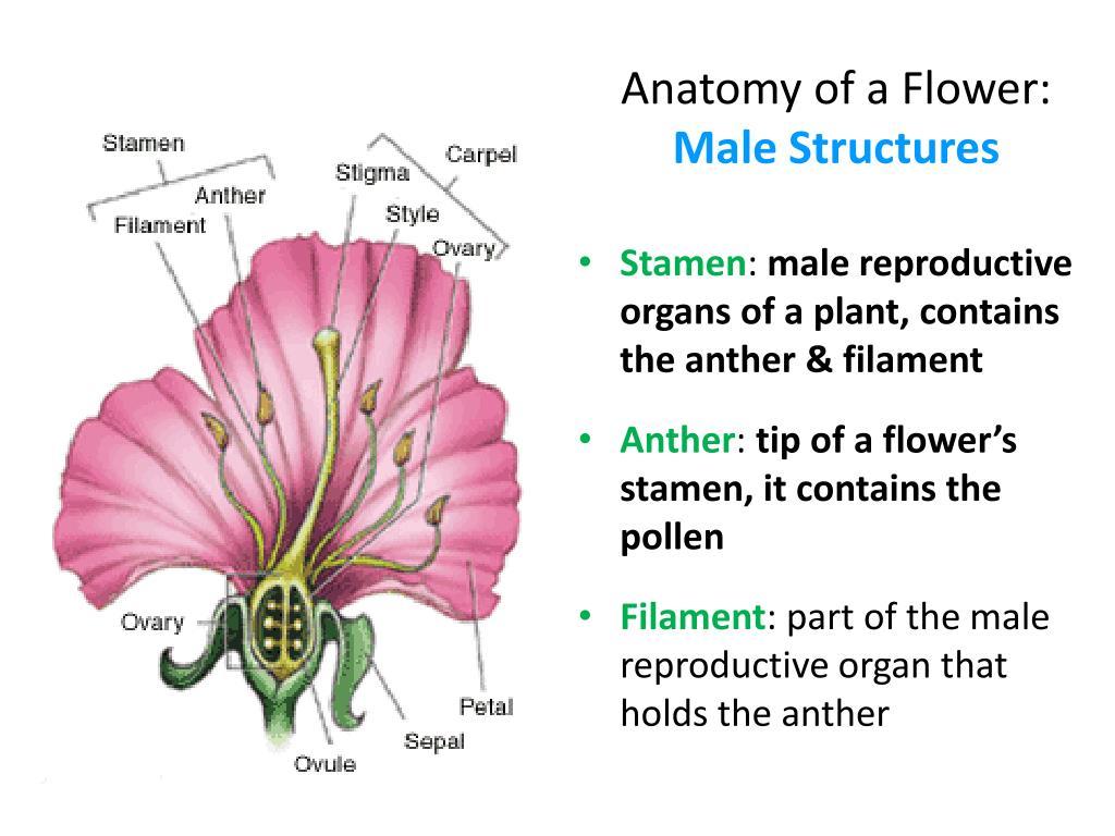 Flower Anatomy Quiz