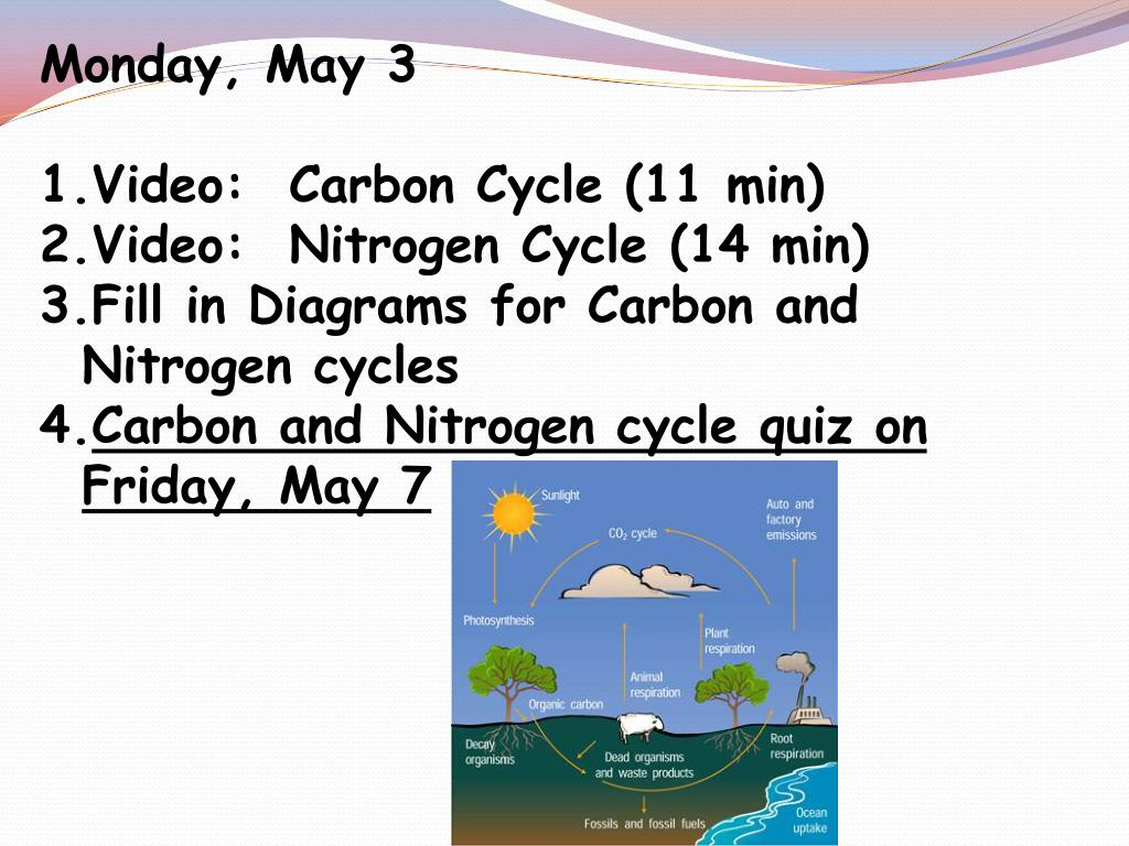 hight resolution of  carbon cycle 11 min video nitrogen cycle 14 min fill in diagrams for carbon and nitrogen cycles carbon and nitrogen cycle quiz on friday may 7