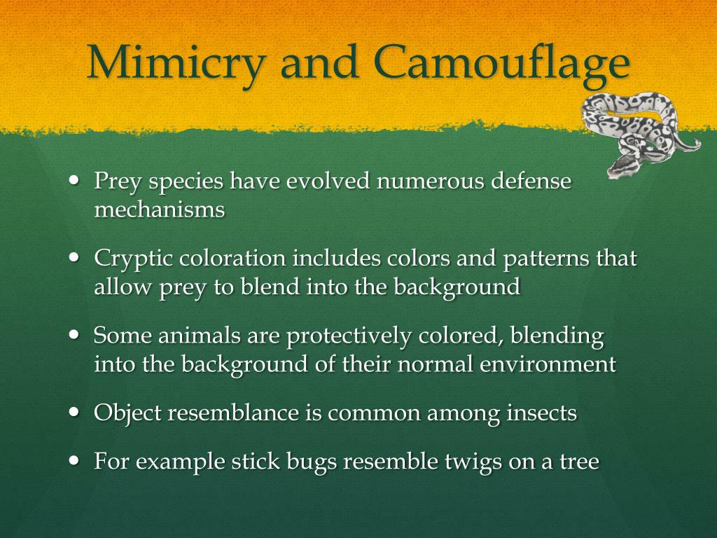 Mimicry And Camouflage Worksheet Printable Worksheets And