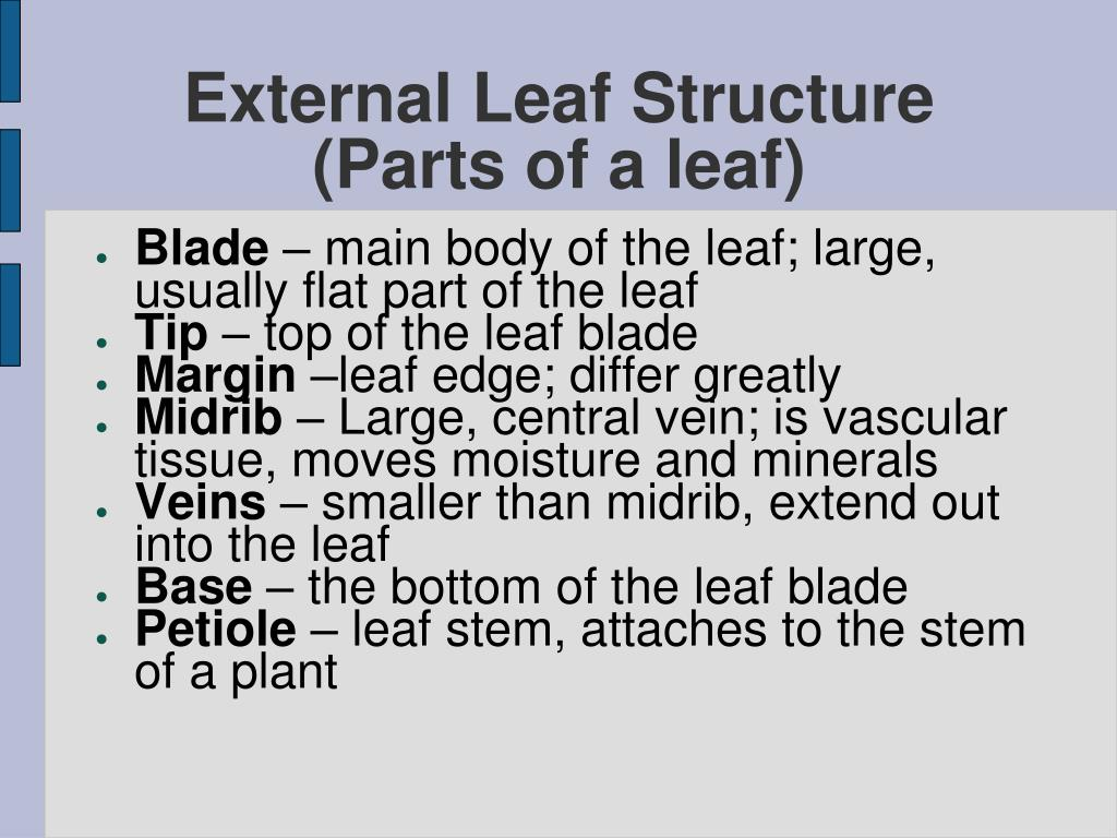 External Structure Of Leaf And Its Function