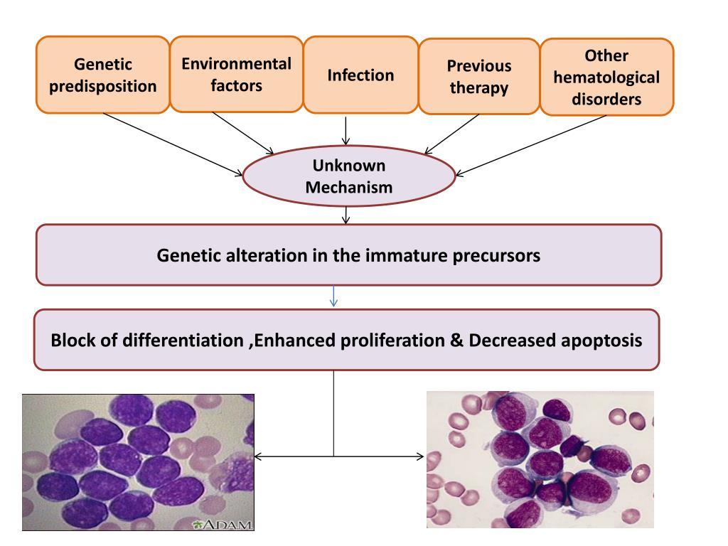 PPT - Aggressive malignant hematopoietic disorders ...