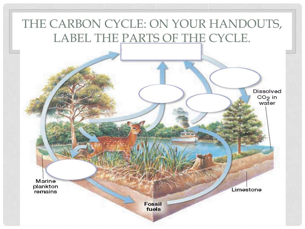 34 Label The Carbon Cycle