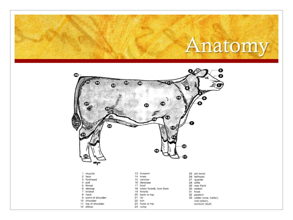 hight resolution of Beef Cattle Anatomy Worksheet   Printable Worksheets and Activities for  Teachers