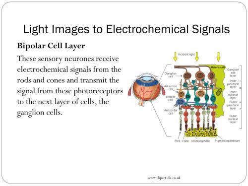 small resolution of light images to electrochemical signals