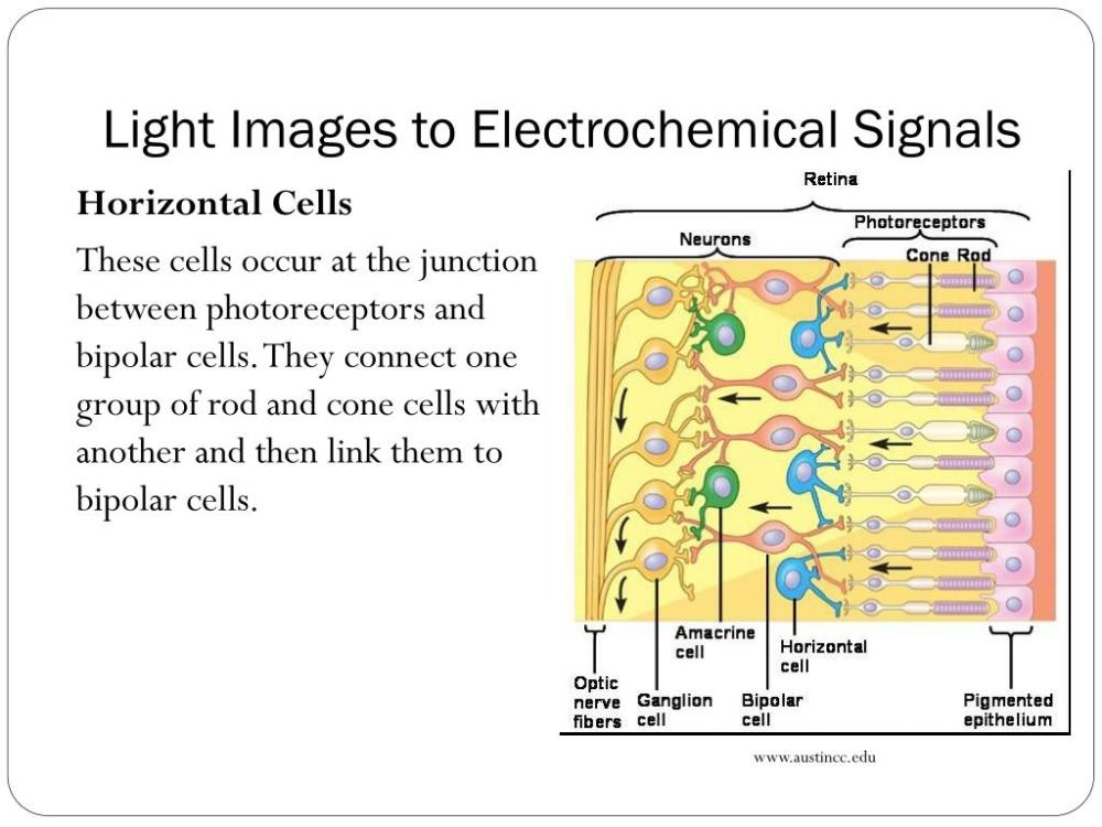 medium resolution of light images to electrochemical signals