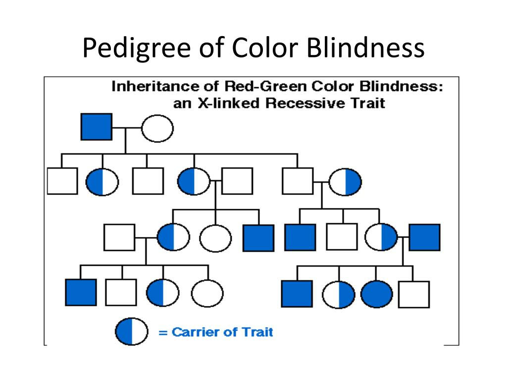 Color Blindness Pedigree Worksheet Printable Worksheets And Activities For Teachers Parents Tutors And Homeschool Families