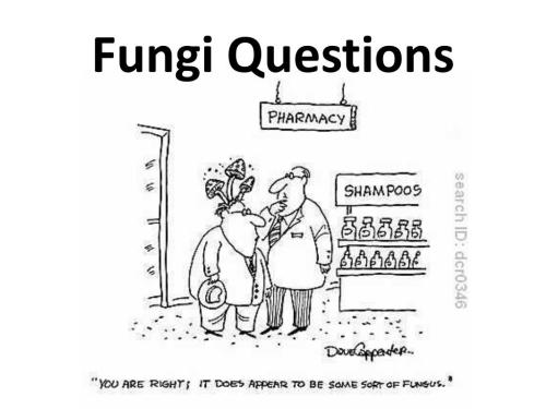 small resolution of fungi questions