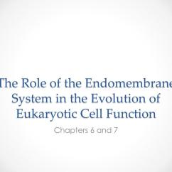Eukaryotic Endomembrane System Cell Diagram 2004 Toyota 4runner Trailer Wiring Ppt The Role Of In Evolution Function Powerpoint Presentation