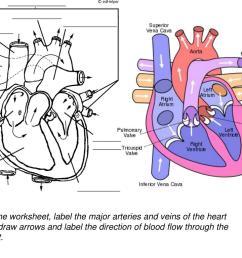 35 Label Arteries And Veins Worksheet - Labels Database 2020 [ 768 x 1024 Pixel ]