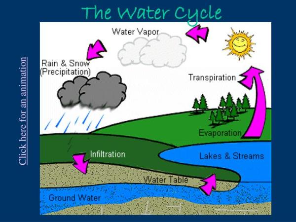 PPT The Water Cycle PowerPoint Presentation ID2343039