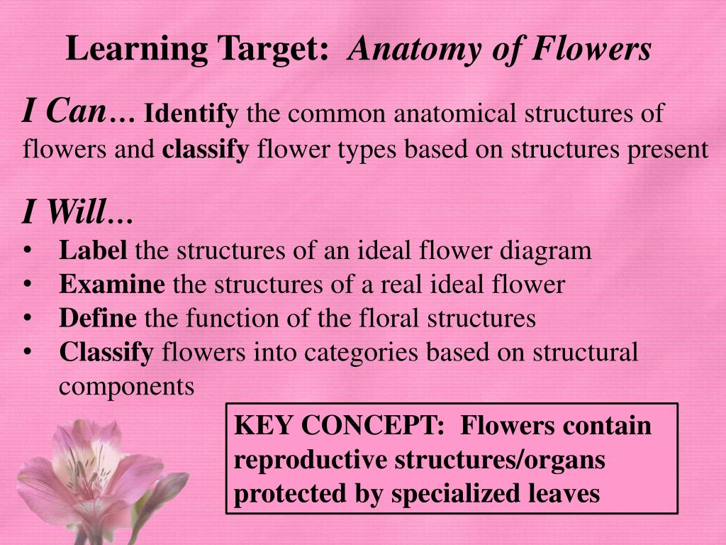 hight resolution of identify the common anatomical structures of flowers and classify flower types based on structures present i will label the structures of an ideal
