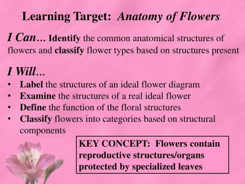 small resolution of identify the common anatomical structures of flowers and classify flower types based on structures present i will label the structures of an ideal