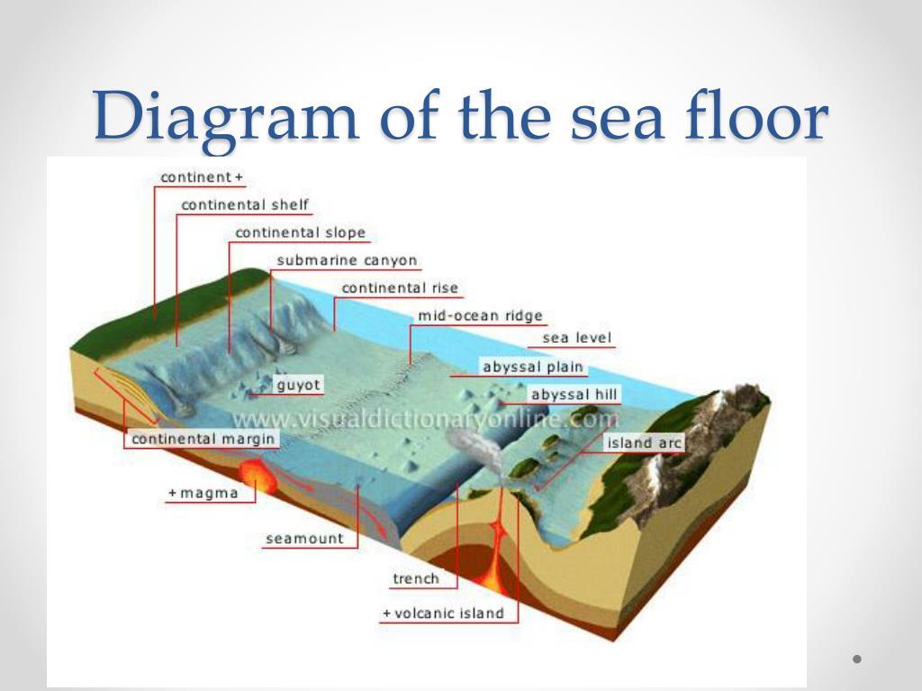 Ocean Floor Diagram Seamount