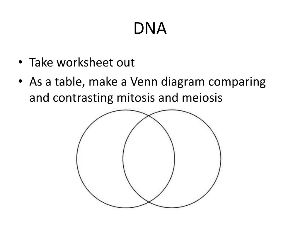 Compare And Contrast Mitosis And Meiosis Worksheet