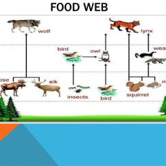 Taiga Food Web Diagram Immersion Heater Wiring Ppt Powerpoint Presentation Id 2373355 Benefits Of
