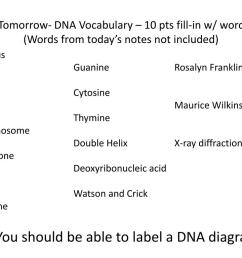 quiz tomorrow dna vocabulary 10 pts fill in w wordbank words from today s notes not [ 1024 x 768 Pixel ]