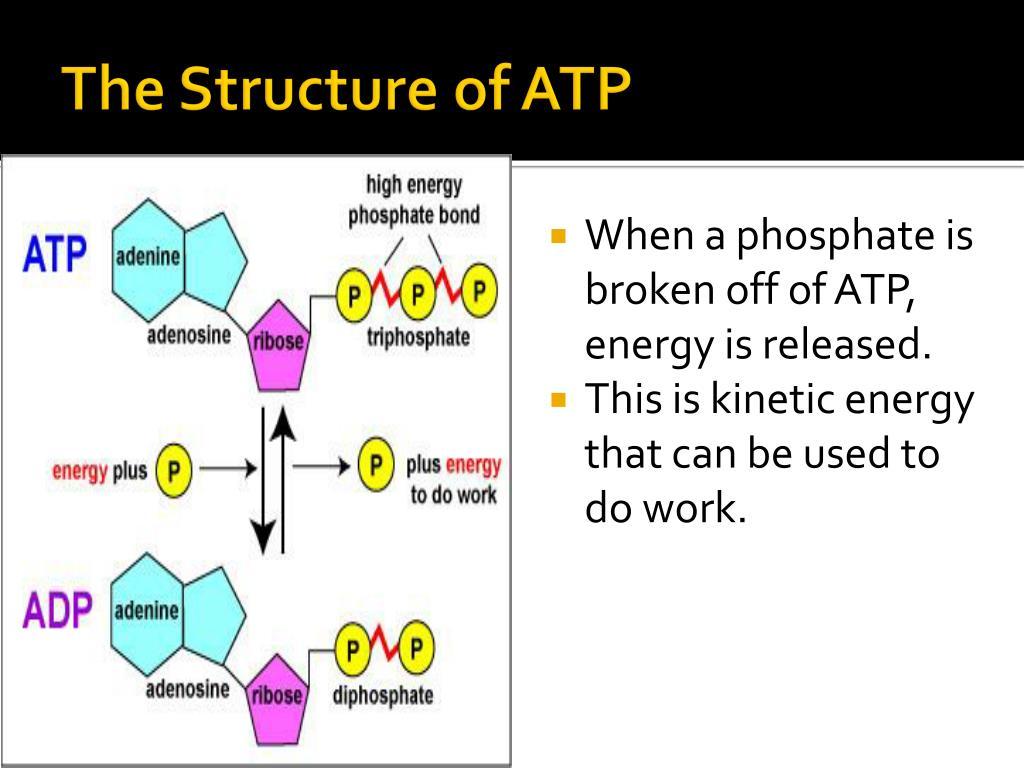 PPT - ATP PowerPoint Presentation - ID:2423329