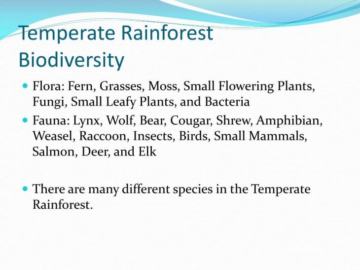 Temperate RainforestBiodiversity ...