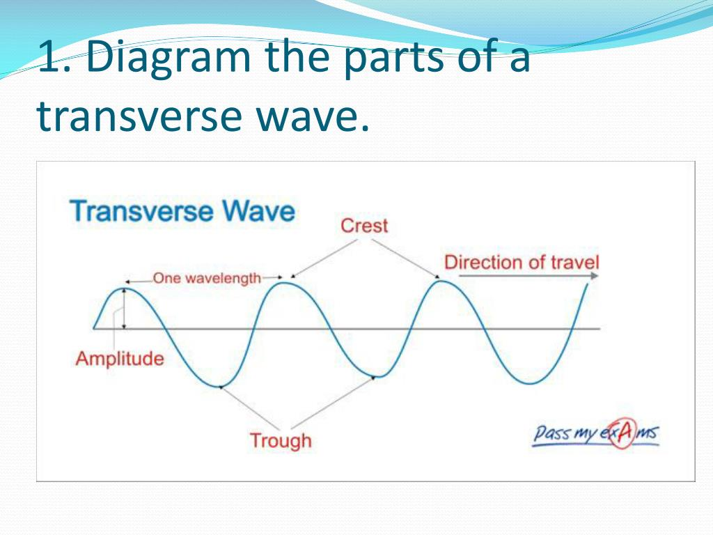 34 Label A Transverse Wave