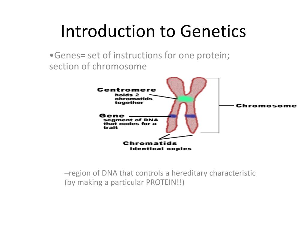 Chromosome Set Ppt Introduction To Genetics Powerpoint Presentation Id 2640819