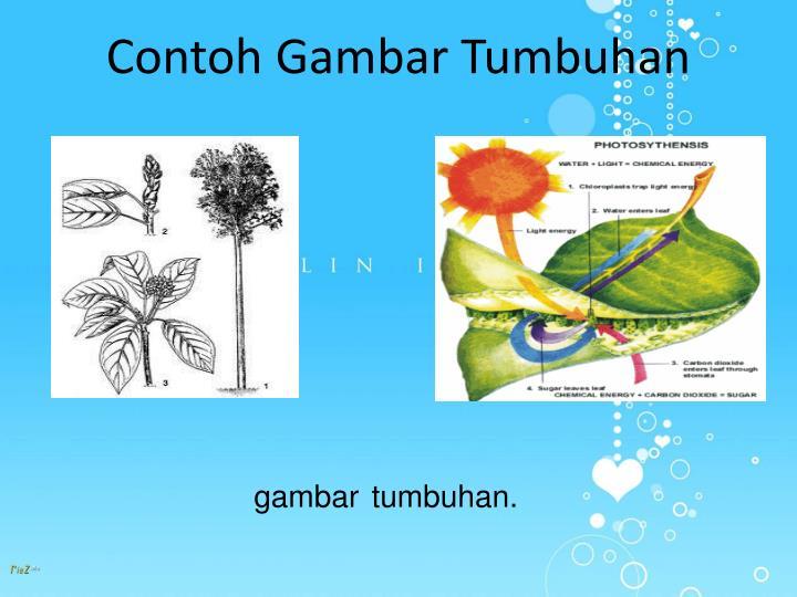 PPT  Gambar Ilustrasi PowerPoint Presentation  ID2717650