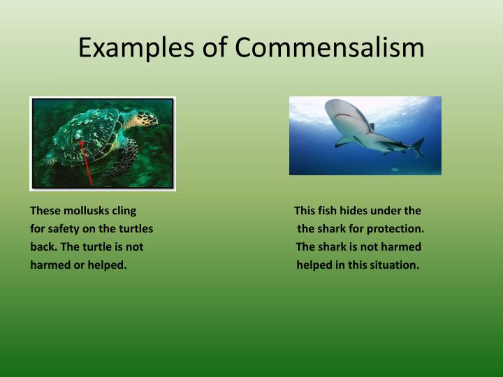 PPT Organisms Interactions PowerPoint Presentation ID