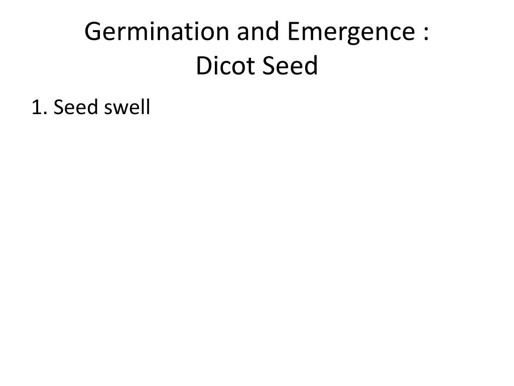 hight resolution of germination and emergence dicot seed
