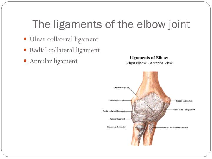 Diagram Of Ulnar Collateral Ligament