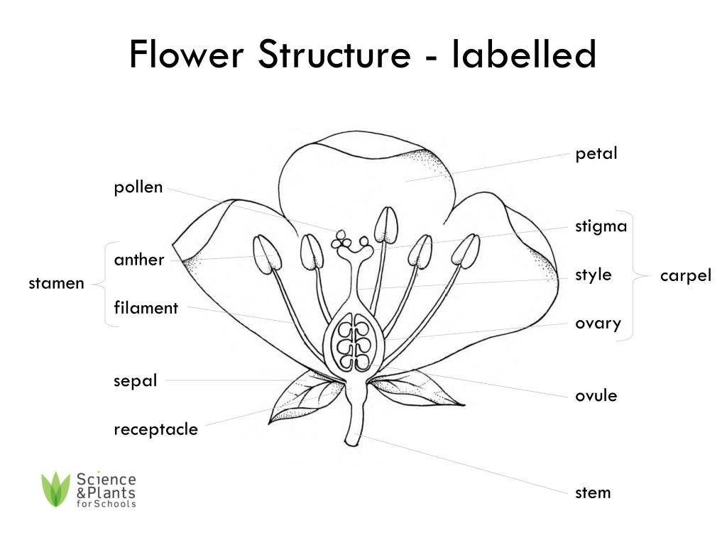 Flower Parts And Functions Diagram
