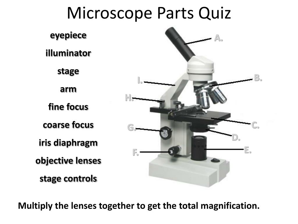 Stage Microscope Definition