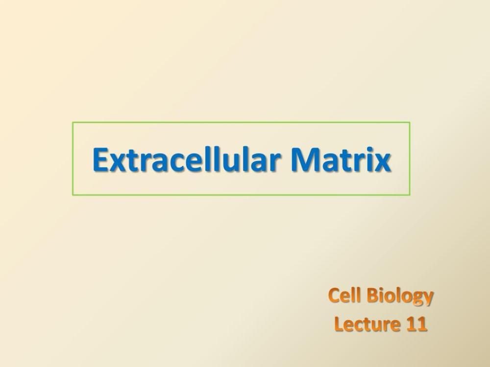 medium resolution of extracellular matrix n